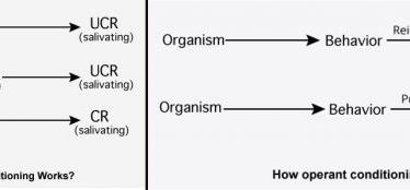 Conditioning definition biology