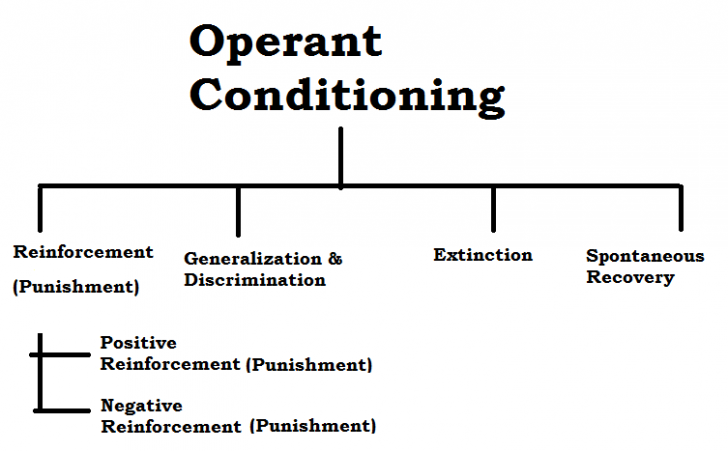 Operant Conditioning Definition And Concepts Psychestudy