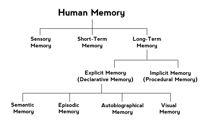 memory and the different types of Types of memory can be classified in a number of ways, depending on the criterion used with duration as the criterion, at least three different types of memory can be distinguished: sensory memory, short-term memory, and long-term memory sensory.