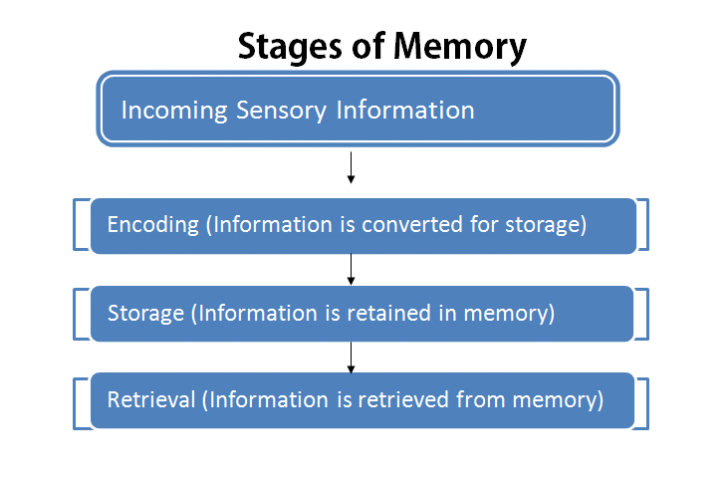 stages-of-memory Stages Of Information Processing Examples on human performance, how hitting badminton,